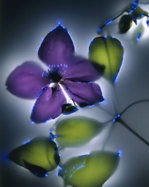 Leuchtende Pflanzen von Christin