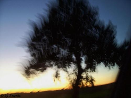 Bäume von Christin