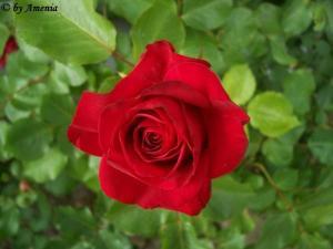 Blumen von Christin 2