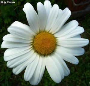 Blumen von Christin 3
