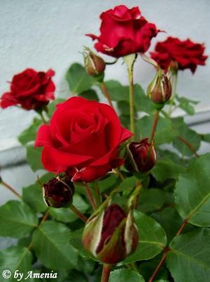 Blumen von Christin 5
