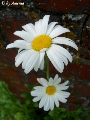 Blumen von Christin 1